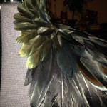 feather placement on collar piece